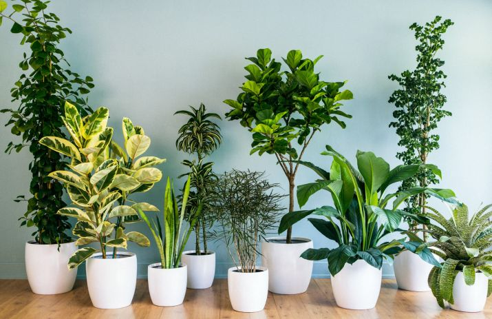 Seven Plant Nursery Websites Worth Checking To Indoor